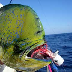 Florida-Fishing-Charters-home3