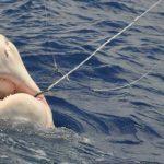 florida-fishing-trips-slide2