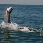tarpon-fishing-slide2