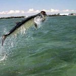 tarpon-fishing-slide4