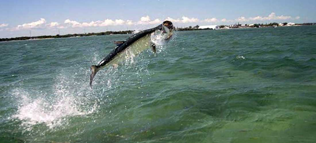 Islamorada fishing charters fishing trips islamorada for Florida tarpon fishing