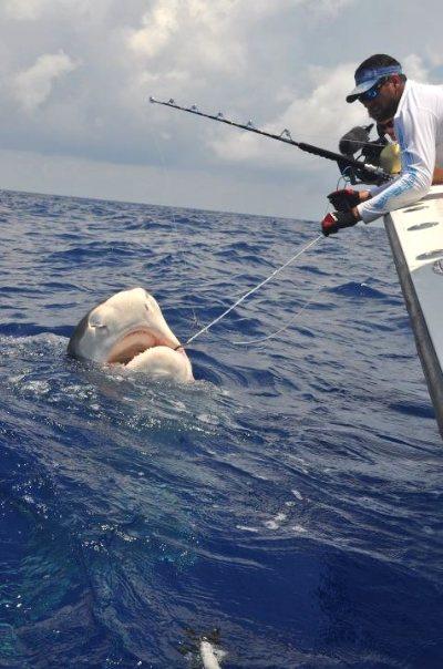 Shark caught off Islamorada Deep sea fishing with a Florida Keys fishing charter